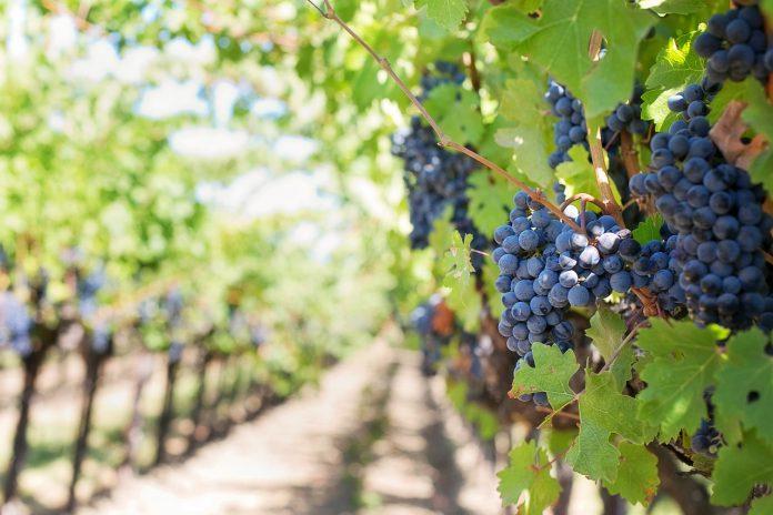vini italiani pregiati
