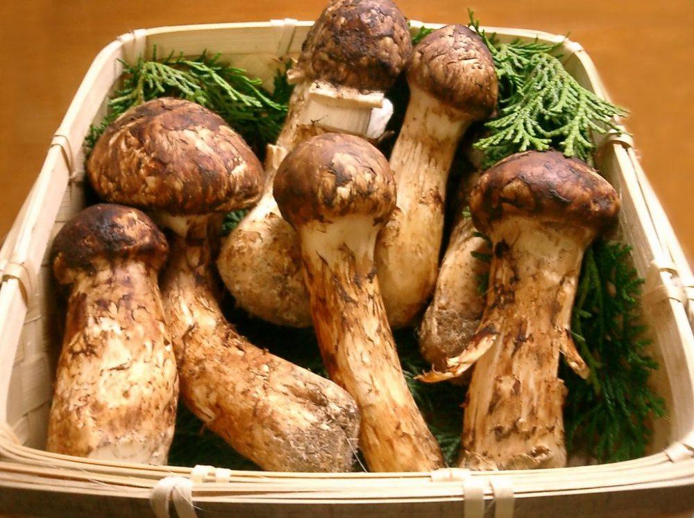 funghi-costosi